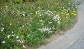 Trail Walk Gesves - GESVES- Le Pré D'Amite- N°07- Bois  - Photo 15