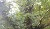 Trail Walk Gesves - GESVES- Haltinne- N°09- Patrimoine - Photo 35