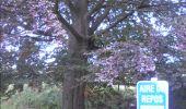 Trail Walk Gesves - GESVES- Haltinne- N°09- Patrimoine - Photo 39