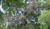 Trail Walk Gesves - GESVES- Haltinne- N°09- Patrimoine - Photo 40