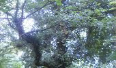 Trail Walk Gesves - GESVES- Haltinne- N°09- Patrimoine - Photo 32