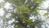 Trail Walk Gesves - GESVES- Haltinne- N°09- Patrimoine - Photo 33