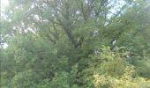 Trail Walk Gesves - GESVES- Haltinne- N°09- Patrimoine - Photo 25