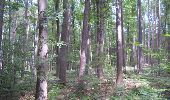 Trail Walk Gesves - GESVES- Haltinne- N°09- Patrimoine - Photo 3