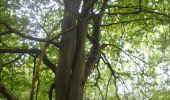 Trail Walk Gesves - GESVES- Haltinne- N°09- Patrimoine - Photo 34