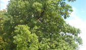 Trail Walk Gesves - GESVES- Haltinne- N°09- Patrimoine - Photo 26