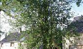 Randonnée Marche Gesves - OHEY- REPPE- N°11-Biodiversité  - Photo 8