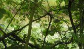 Trail Walk Gesves - OHEY- REPPE- N°11-Biodiversité  - Photo 16
