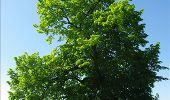 Randonnée Marche Gesves - OHEY- REPPE- N°11-Biodiversité  - Photo 18