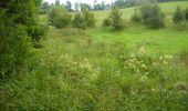 Randonnée Marche Gesves - OHEY- REPPE- N°11-Biodiversité  - Photo 17