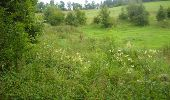 Trail Walk Gesves - OHEY- REPPE- N°11-Biodiversité  - Photo 17