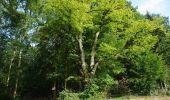 Trail Walk Ohey - OHEY- Evelette (Libois)- N° 13 Eau  - Photo 27