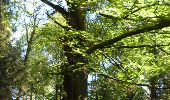 Trail Walk Ohey - OHEY- Evelette (Libois)- N° 13 Eau  - Photo 25