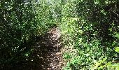 Randonnée V.T.T. HIERES-SUR-AMBY - hyeres sur amby optevoz  - Photo 4