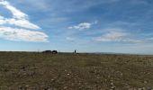 Trail Walk LE PONT-DE-MONTVERT - Le sommet de Finiels - Photo 2