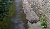 Trail Walk Yvoir - Boucle Godinne Mont chemins publics - Photo 3