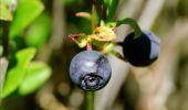 Randonnée Marche Florenville - Les Epioux. Natura 2000, des sites qui valent le détour ! Lx 2 - Photo 4