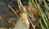 Randonnée Marche Florenville - Les Epioux. Natura 2000, des sites qui valent le détour ! Lx 2 - Photo 1