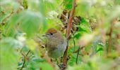 Randonnée Marche Florenville - Les Epioux. Natura 2000, des sites qui valent le détour ! Lx 2 - Photo 7