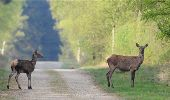 Randonnée Marche Florenville - Les Epioux. Natura 2000, des sites qui valent le détour ! Lx 2 - Photo 3