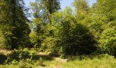 Randonnée Marche Florenville - Les Epioux. Natura 2000, des sites qui valent le détour ! Lx 2 - Photo 6