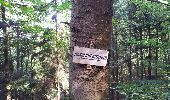 Trail Walk BITSCHWILLER-LES-THANN - Bitschwiller les Thann  - Photo 6