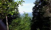 Trail Walk BITSCHWILLER-LES-THANN - Bitschwiller les Thann  - Photo 3