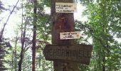 Trail Walk BITSCHWILLER-LES-THANN - Bitschwiller les Thann  - Photo 2