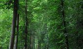 Trail Walk Rochefort - Villers-sur-Lesse, Eprave & Lessive - Balade pédestre - Roadbook Famenne-Ardenne - Photo 2