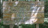 Randonnée Marche LAILLY - Forêt de de Lancy/Vauluisant (Polissoirs + Dolmens) - Photo 12