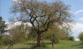 Randonnée Moteur Rochefort - Auto : Nature - Pierres du Pays - Rochefort - Photo 62