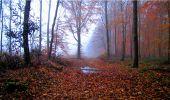 Trail Walk LONGPONT - en forêt de Retz_9_Longpont_etangs de la Ramee_AR - Photo 14