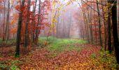 Trail Walk LONGPONT - en forêt de Retz_9_Longpont_etangs de la Ramee_AR - Photo 8