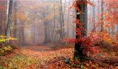 Trail Walk LONGPONT - en forêt de Retz_9_Longpont_etangs de la Ramee_AR - Photo 10