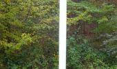 Trail Walk Unknown - Balade dans le Massif du Triage - Forêt d'Eu - Photo 5