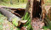 Trail Walk Unknown - Balade dans le Massif du Triage - Forêt d'Eu - Photo 3