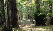 Randonnée V.T.T. SAINT-AUBIN-LES-FORGES - Rando en forêt des Bertranges - Saint-Aubin-les-Forges  - Photo 4