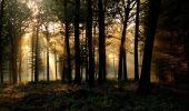Randonnée V.T.T. SAINT-AUBIN-LES-FORGES - Rando en forêt des Bertranges - Saint-Aubin-les-Forges  - Photo 5