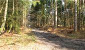 Trail Walk LONGPONT - en forêt de Retz_13_Longpont_carrefour de la Croix de Guise_AR - Photo 67