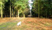 Trail Walk LONGPONT - en forêt de Retz_13_Longpont_carrefour de la Croix de Guise_AR - Photo 88