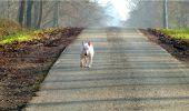 Trail Walk LONGPONT - en forêt de Retz_13_Longpont_carrefour de la Croix de Guise_AR - Photo 60