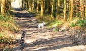 Trail Walk LONGPONT - en forêt de Retz_13_Longpont_carrefour de la Croix de Guise_AR - Photo 74