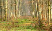 Trail Walk LONGPONT - en forêt de Retz_13_Longpont_carrefour de la Croix de Guise_AR - Photo 39