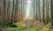 Trail Walk LONGPONT - en forêt de Retz_13_Longpont_carrefour de la Croix de Guise_AR - Photo 45