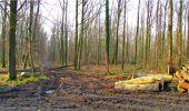 Trail Walk LONGPONT - en forêt de Retz_13_Longpont_carrefour de la Croix de Guise_AR - Photo 29