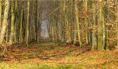 Trail Walk LONGPONT - en forêt de Retz_13_Longpont_carrefour de la Croix de Guise_AR - Photo 40