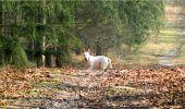 Trail Walk LONGPONT - en forêt de Retz_13_Longpont_carrefour de la Croix de Guise_AR - Photo 89