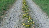 Randonnée Marche Sainte-Ode - RB-Lu-08 - De part et d'autre de l'Ourthe occidentale - Photo 4