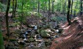 Randonnée Marche Spa - Berinzenne. Natura 2000, des sites qui valent le détour. Lg 14. - Photo 10