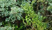 Randonnée Marche Spa - Berinzenne. Natura 2000, des sites qui valent le détour. Lg 14. - Photo 3